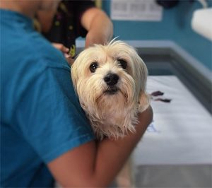 wat doet giardia bij honden vasi vérszegénység kezelése