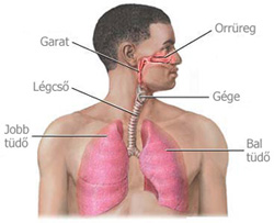 Tüdőrák – Megéri rágyújtani?!