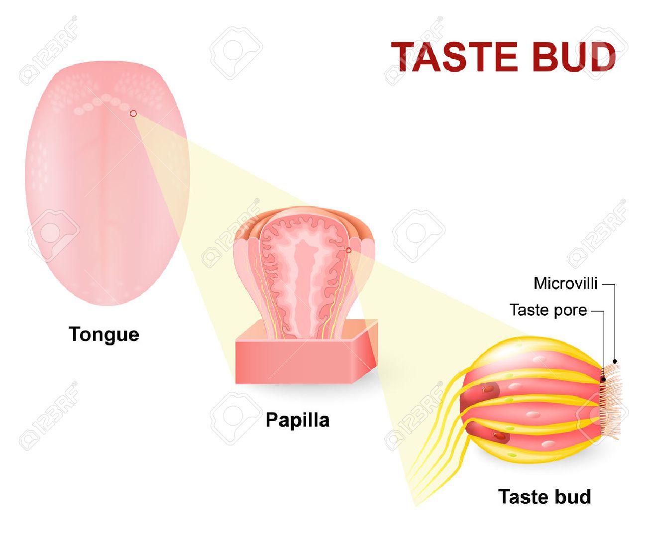 A gyermek nyelvén található plakk: milyen betegség jelez? - Teratoma