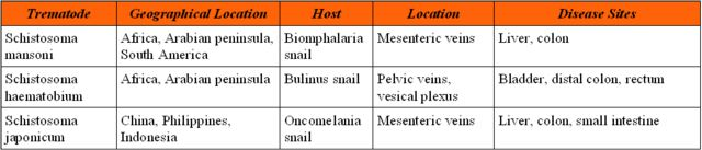 a schistosomiasis oka