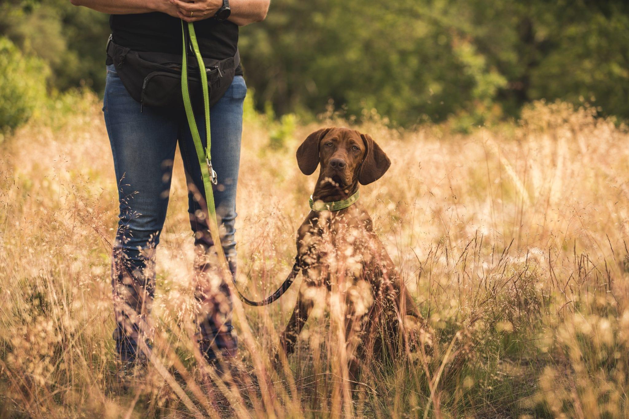 wat doet giardia bij honden