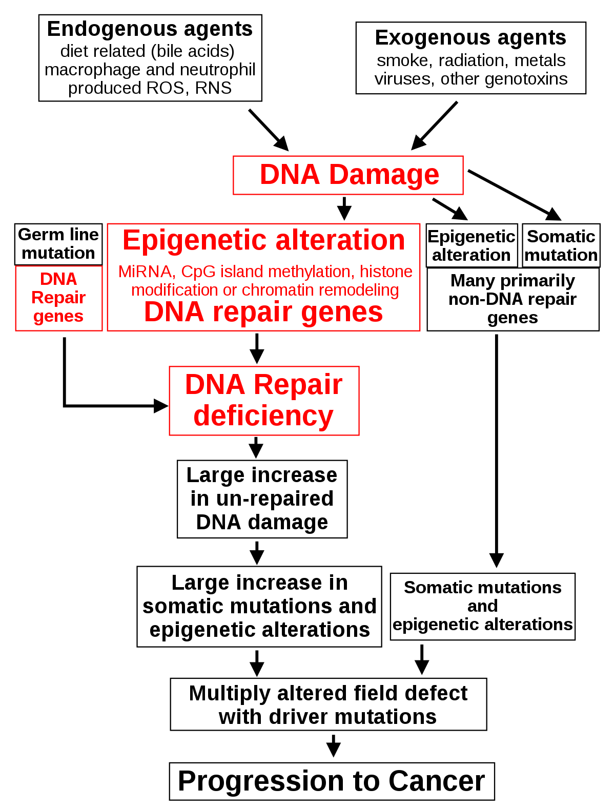 rák és genetikai változások mms és paraziták