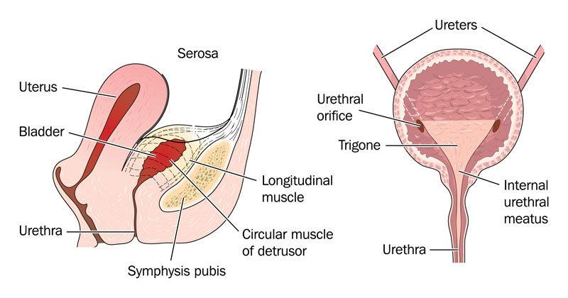 Hólyagrák férfiak tüneteiben