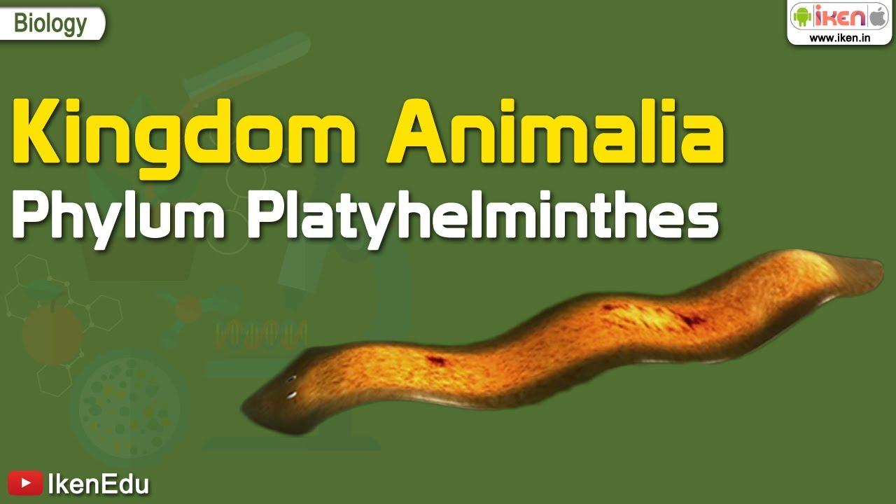 manhat filum platyhelminthes hasnyálmirigyrák patofiziológiája