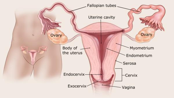 endometrium rák sugárterápia a condyloma tüskéje