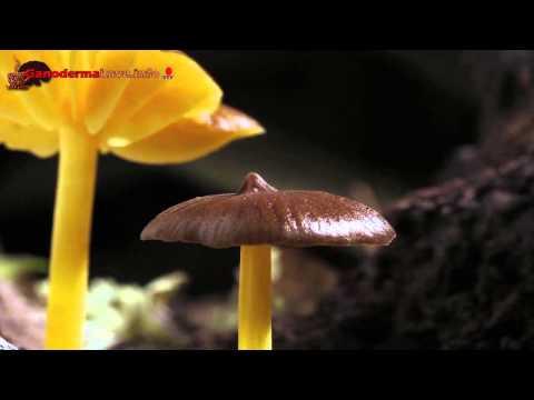 paraziták és gombák eltávolítása