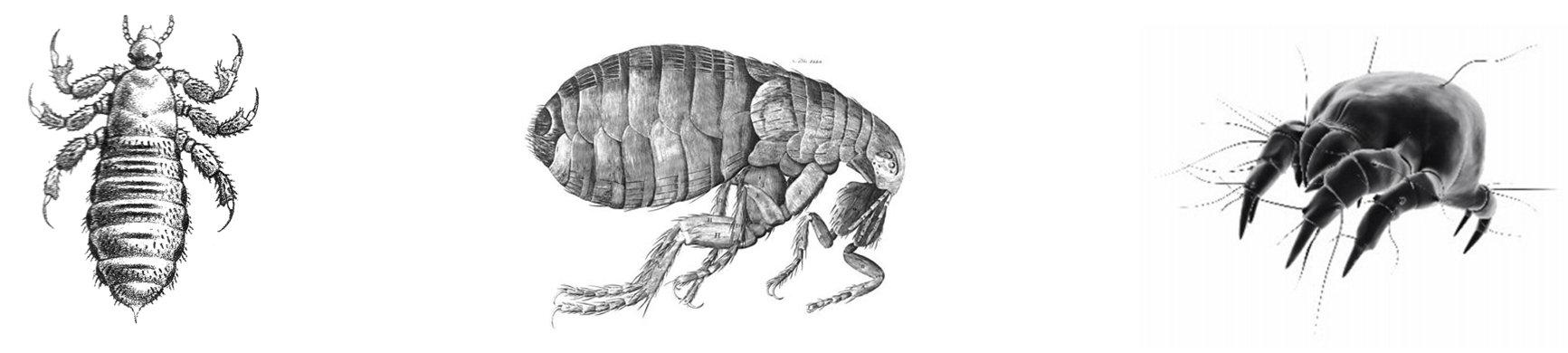 paraziták terjesztették a pletykát