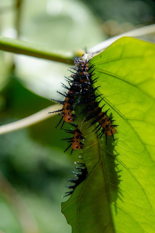 Előmásztak a rovar testéből, majd orgiát rendeztek