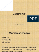 bhre baktériumok)