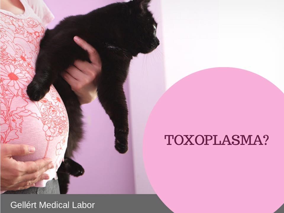a toxoplazmózis inkubációs ideje emberben