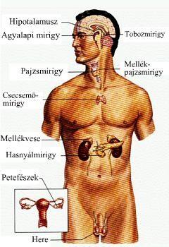 endokrin rák kezelése)