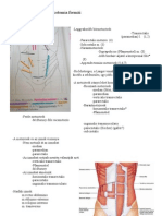 intraductalis papilloma szonográfia