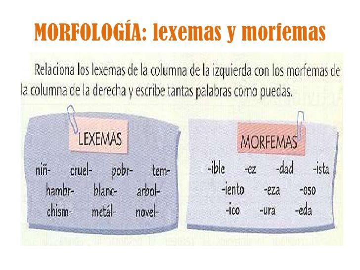 Szarvasmarha szalagféreg morfológiája
