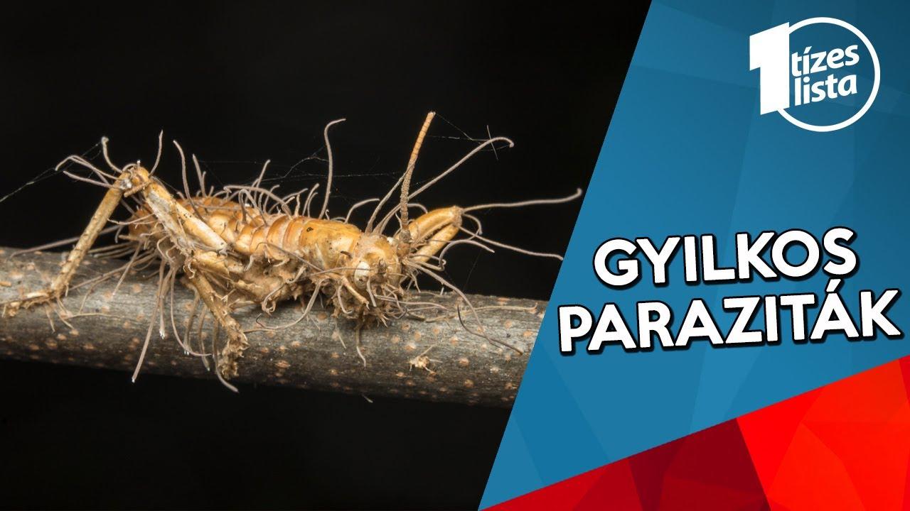 gyilkos parazita tabletta