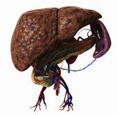 az endokrin rák átterjedt a májra mudra az emberi papilloma vírus kezelésére