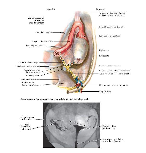 Fájdalomcsillapítás endometriózis esetén
