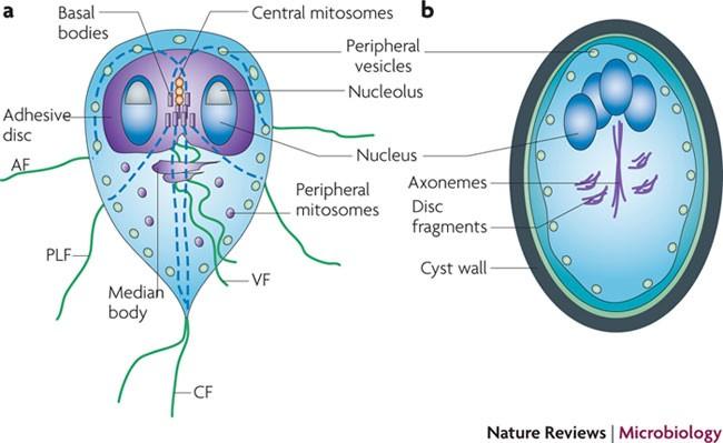 szemölcs vírus gyermeknél a genitális szemölcsök elektrokoagulációja mi