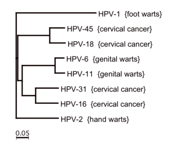 okozhat-e a hpv lymphoma rákot