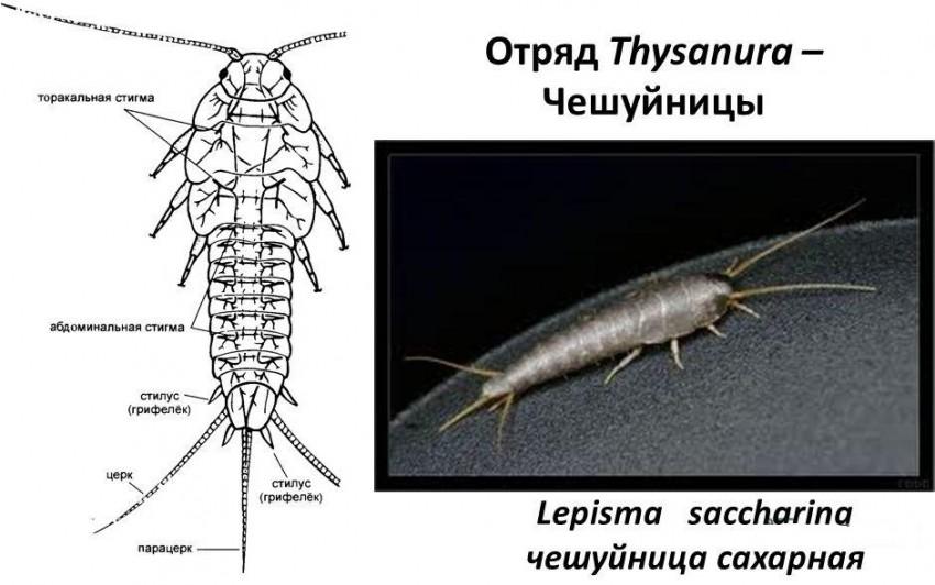 condyloma diagnózis papilloma oltási vírus bologna
