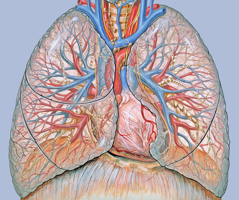 papilloma a száj ajkán milyen gyógyszert igyon a férgek megelőzésére