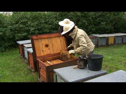 Vírusok, baktériumok, méhbetegségek - interjú Dr. Rusvai Miklós állatorvos-virológussal