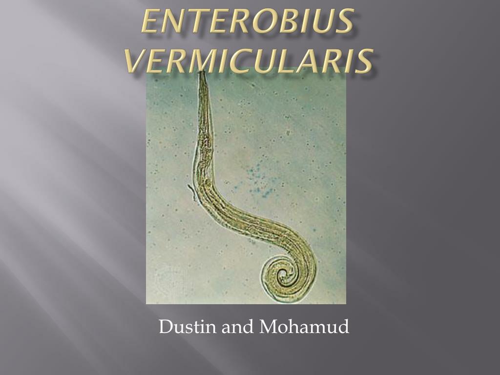 enterobius vermicularis phylum