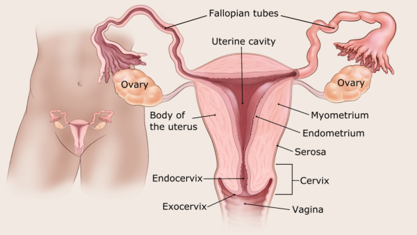 polip endometrium rák