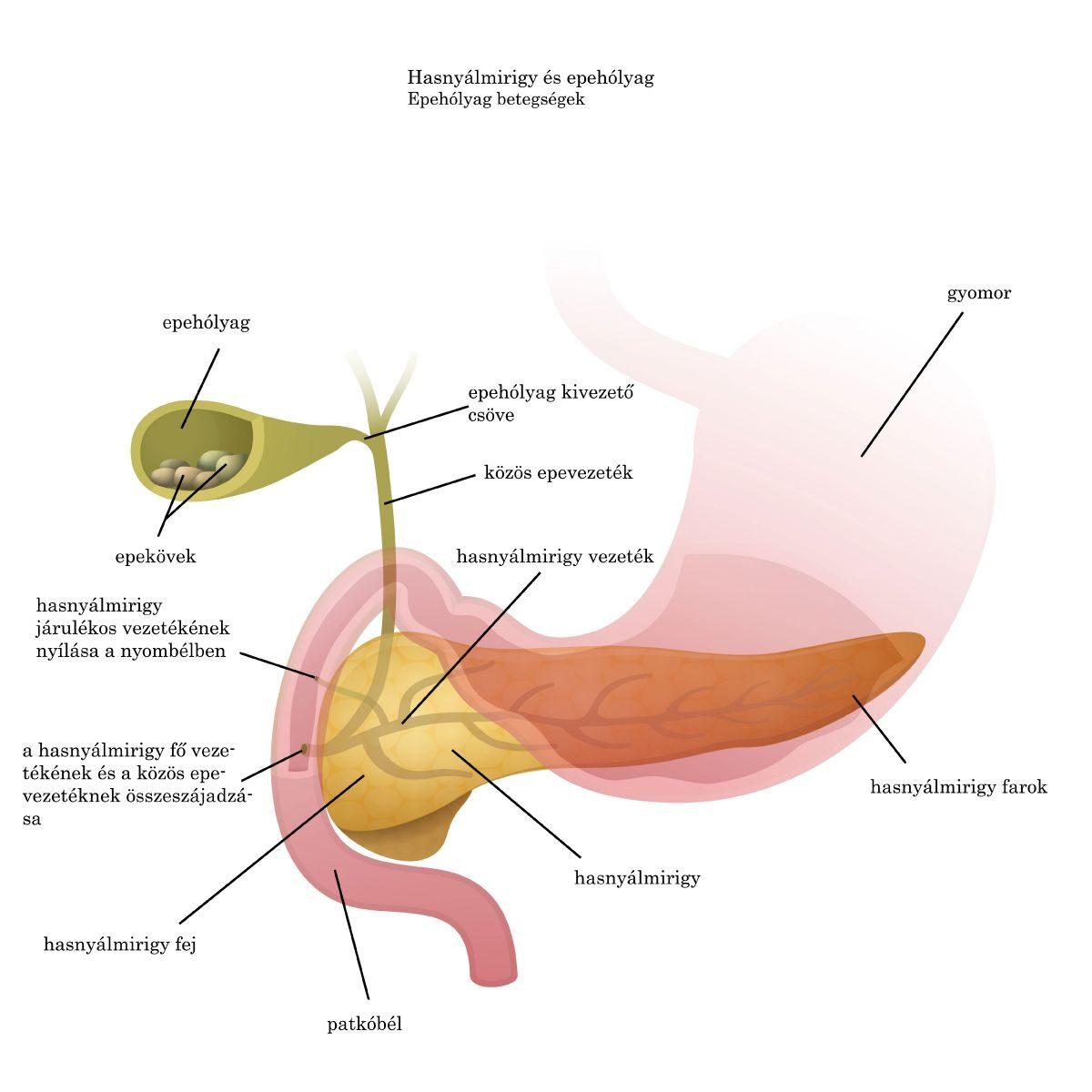 paraziták kezelési tünetei