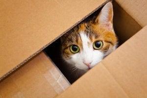giardia katt symtom