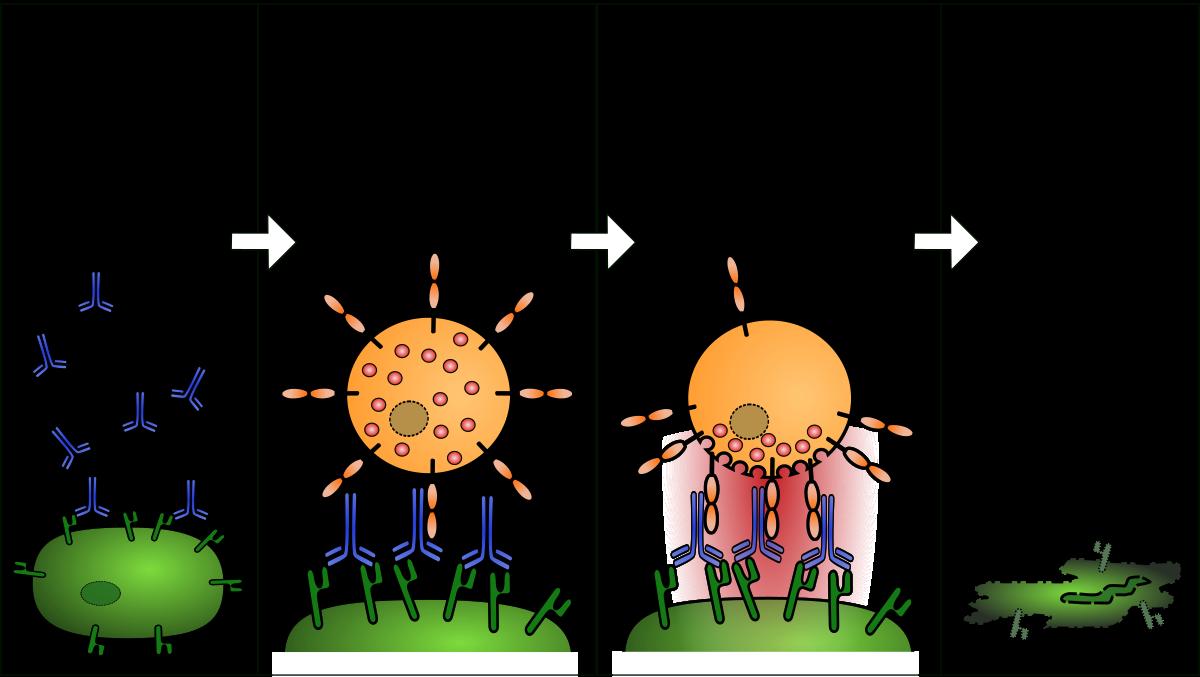 férgek és allergiás reakciók