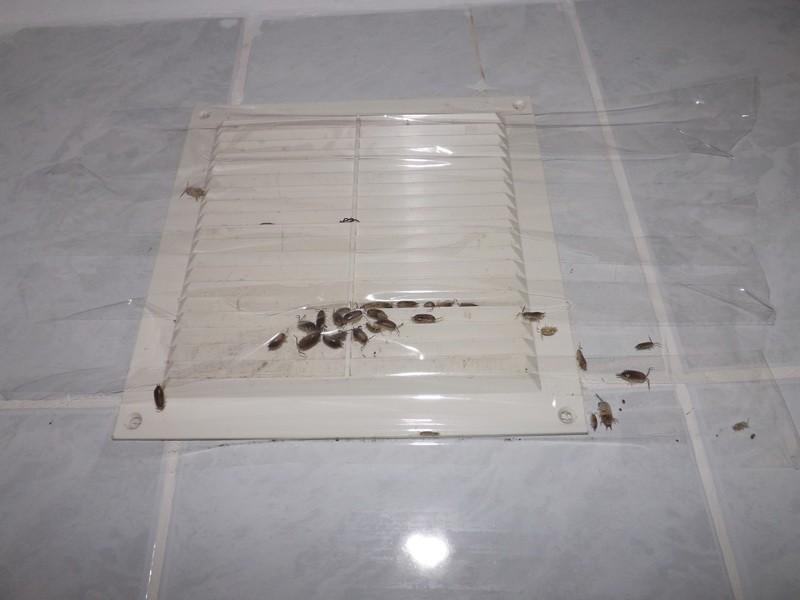 mi okozza a ductalis papillómát gyermekek kezelése pinworms