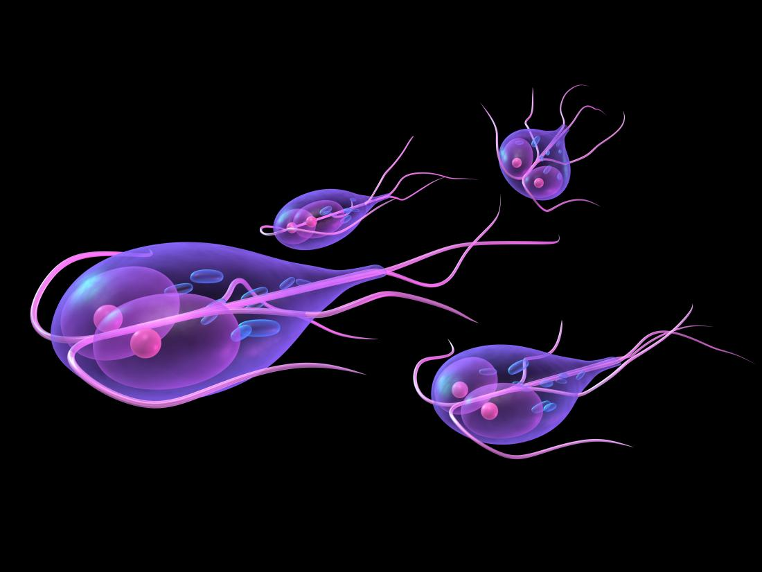 Gyomor-bélhurut – Wikipédia Giardiasis gastroenteritis