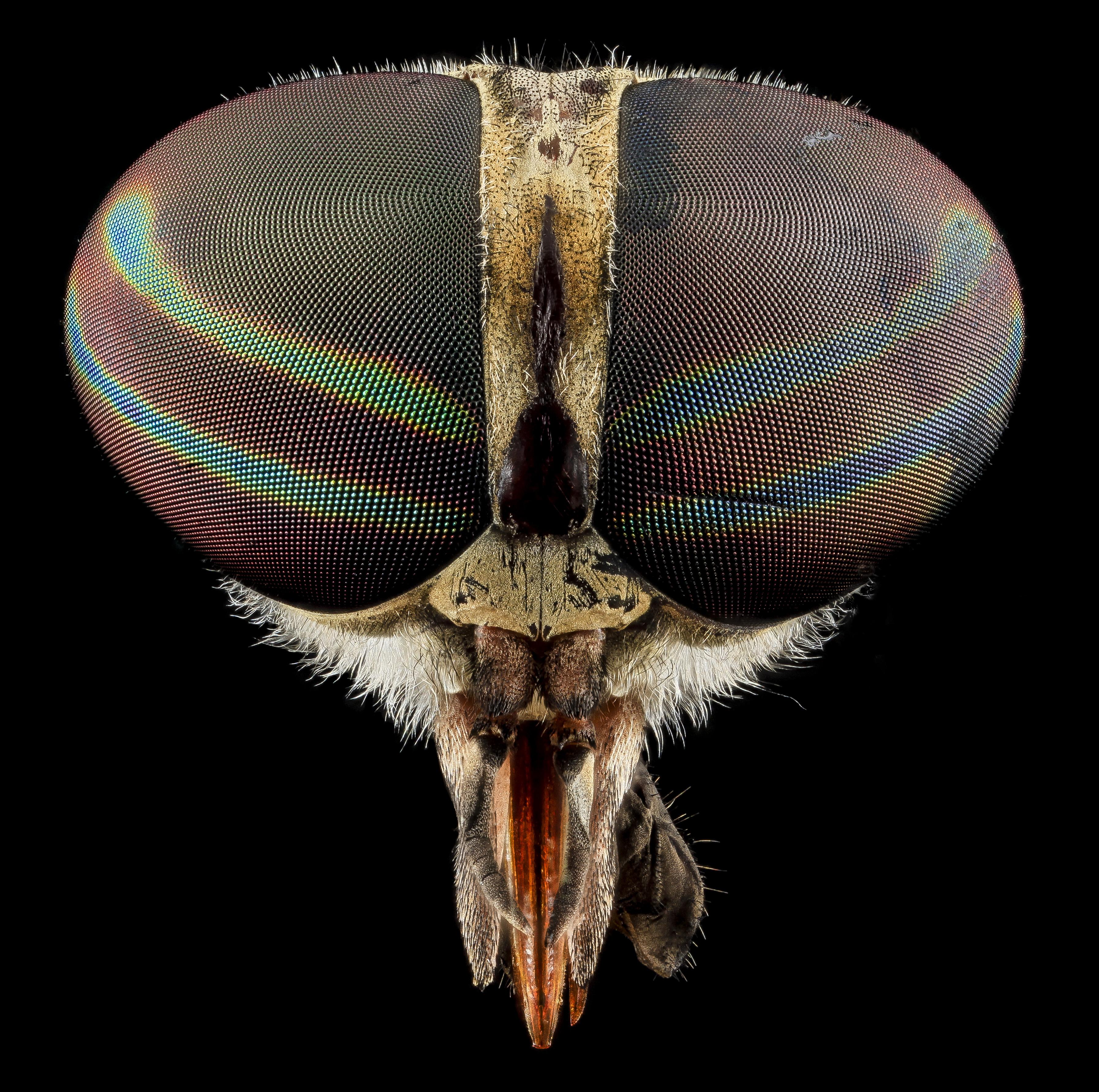 Parazita a belekben | 13 természetes módszer élősködők ellen, Gyogynoveny a parazitak ellen
