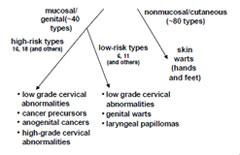 hpv vakcina mellékhatások cdc