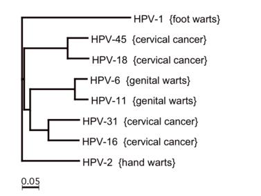 humán papillomavírus retrovírusok)