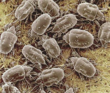 külső paraziták típusai