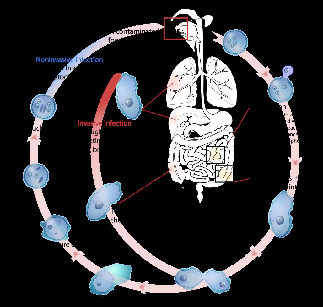 az emberi helminták kezelésére szolgáló gyógyszer