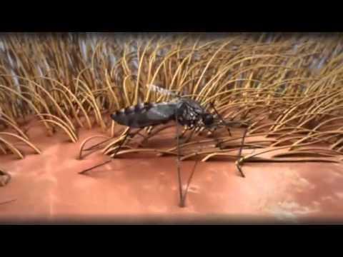 paraziták kezelése Kalinyingrádban