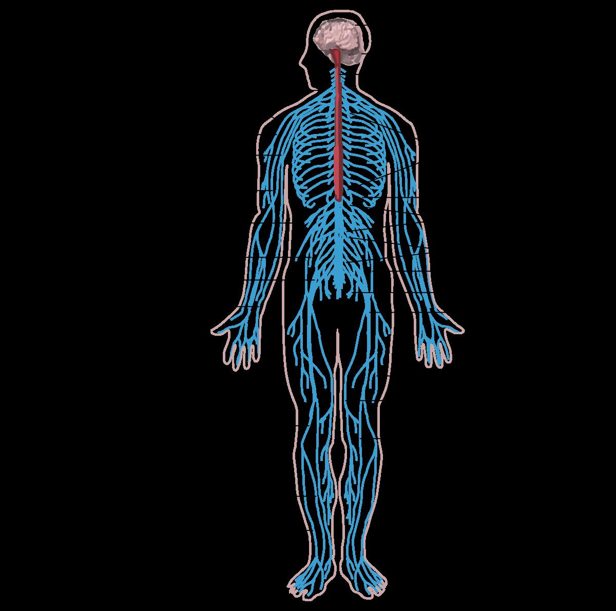 Puhatestű parazita az emberi test kezelésénél. A perianális régió betegségei - Klinikák