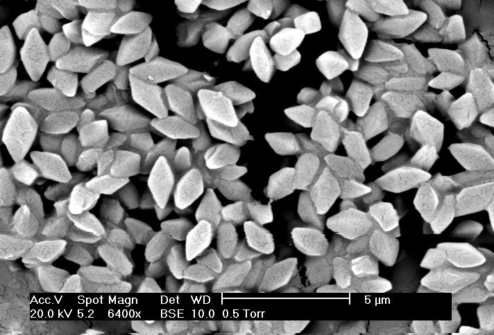 Történetek a Bacillus thuringiensis-ről