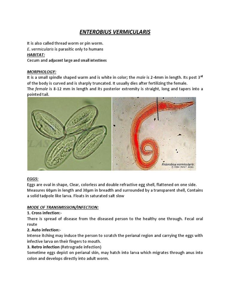 vermigális pinworm kezelés)