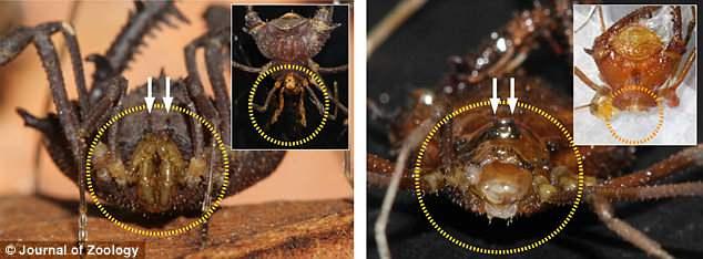 flapworm férgek