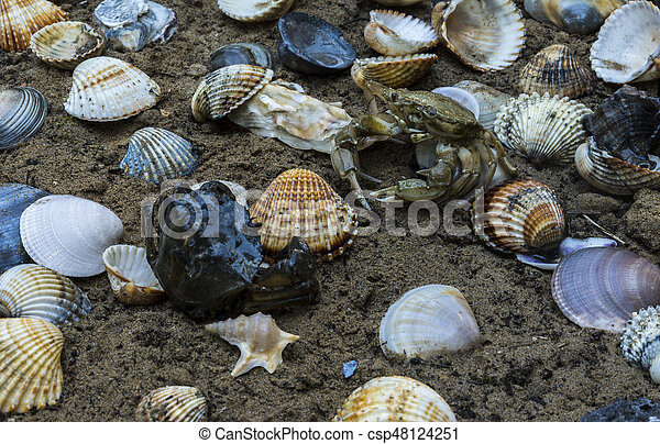 tengeri kagylók