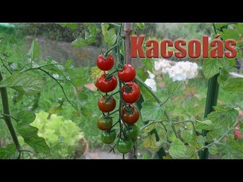 leishmania paraziták termesztése)