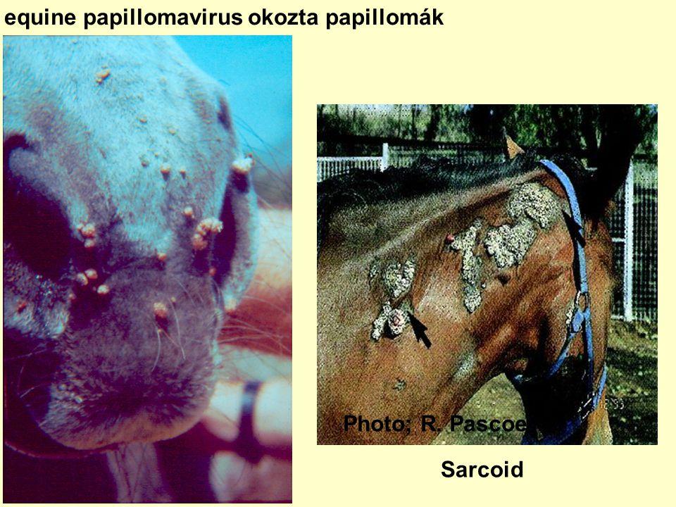 giardia kezelés a pult felett a nyelőcső kezeléséből származó laphámsejtes papilloma