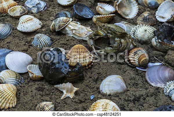 tengeri kagylók mely tabletták jobbak a paraziták ellen
