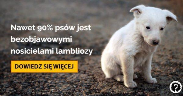 ködös giardia és psa)