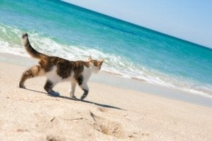 Giardia katt symptom