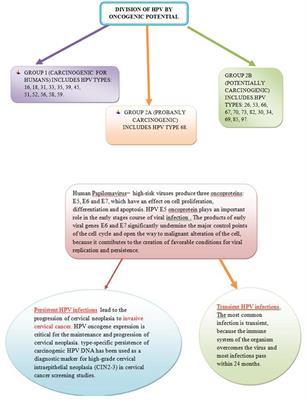 papillomavírus 3. stádium)