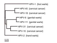 Kipróbáltam az otthoni HPV tesztet, ami akár életet is menthet | setalo.hu